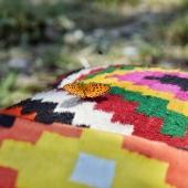 Quand les couleurs des coussins Samak rencontrent celles de la nature. 🌞 . . . . #margoum #coussin #coussins #coussindeco #tapis #tapisberbere #kilim #papillon #butterfly #pillow #handmadepillow #kilimpillow #houssedecoussin #handmadedecoration #décoration #butterflypillow #nature #couleurs